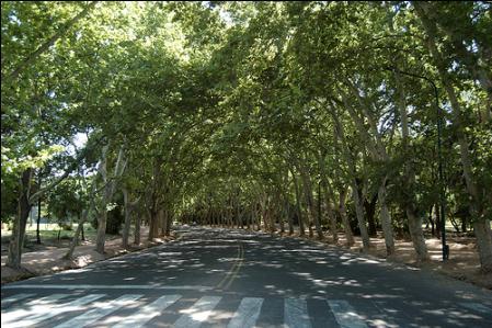 Shady Mendoza street
