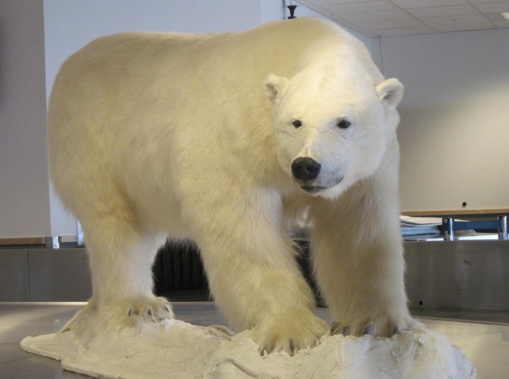 Everyone's favorite polar bear