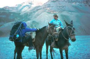 Tom mounts mule